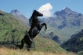 Young Black Stallion 2003 movie screen 4.jpg