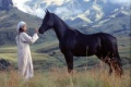 Young Black Stallion 2003 movie screen 2.jpg